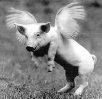 French Scientists Working to Create Swine-Bird Superflu