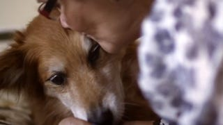 Dog saves his owner's life smelling her cancer
