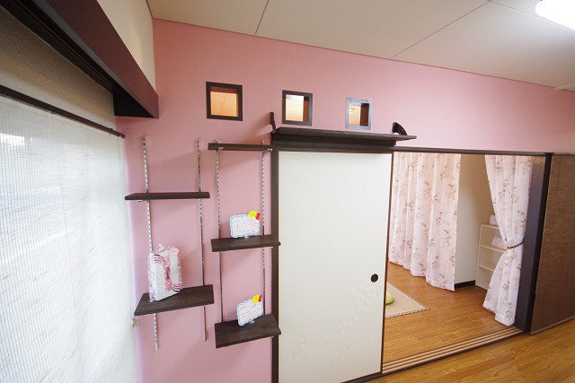 Japan's Cat Apartments Come with... Cats