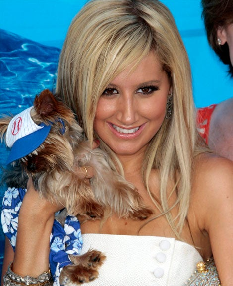 Memo To Ashley Tisdale: Do Not Bring Your Small Dog When On The Red Carpet