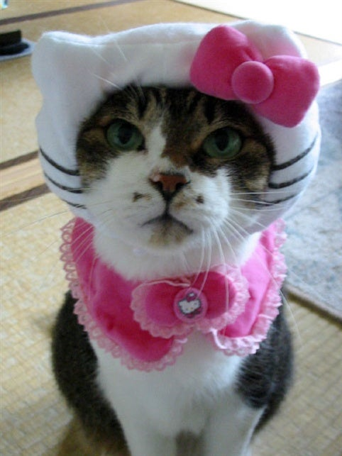 Japan's Hello Kitty Cat Humiliation System