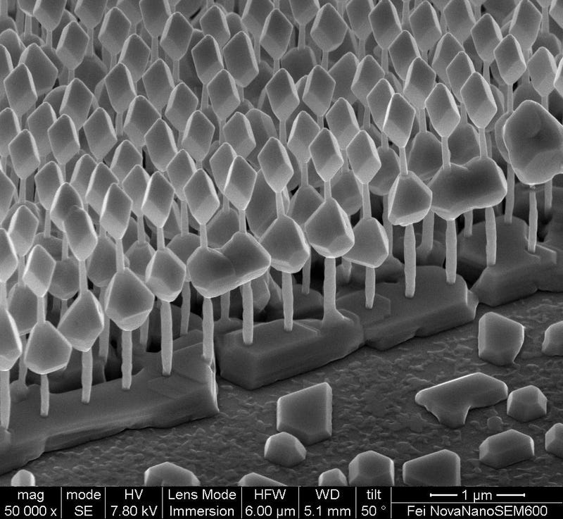 2011 FEI's electronic microscope image contest gallery