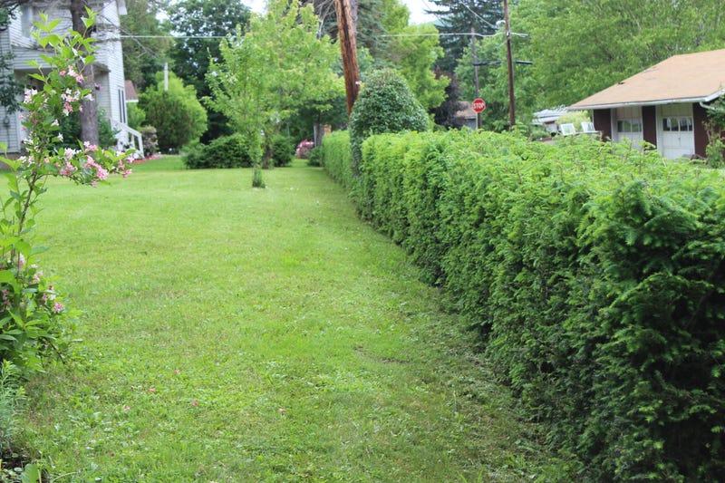 Hedge Humblebrag