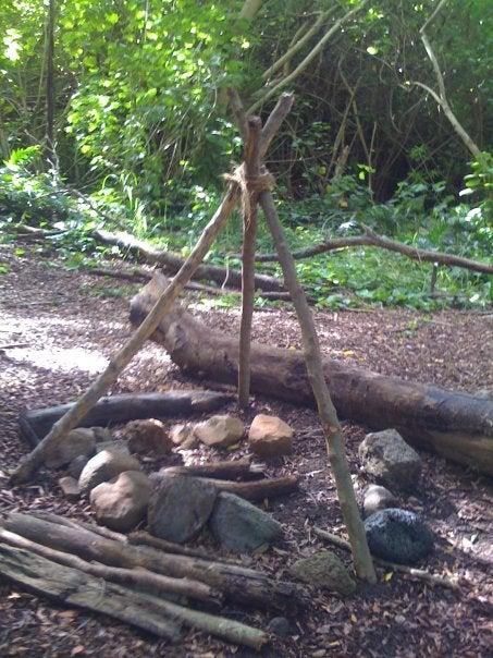 Lost Rainforest Set