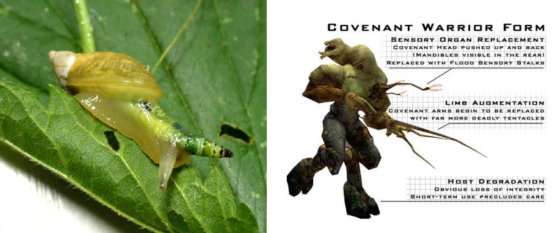 Real-Life Parasites That Behave Remarkably Like Halo's Most Disgusting Enemy