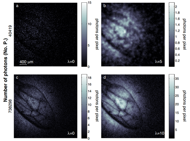 Investigadores logran tomar una foto en una oscuridad casi absoluta