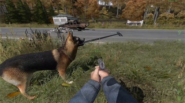DayZ is Getting...Dogs. Not Zombie Dogs, Real Dogs.