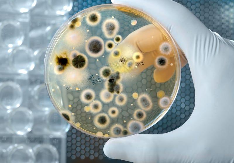 Científicos chinos crean una cepa posiblemente letal de gripe aviar