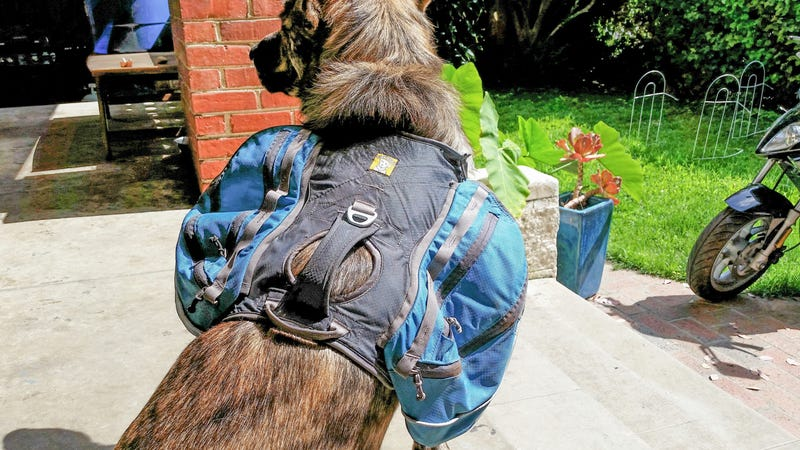 ​Adventure Tested: Ruffwear Approach Dog Pack