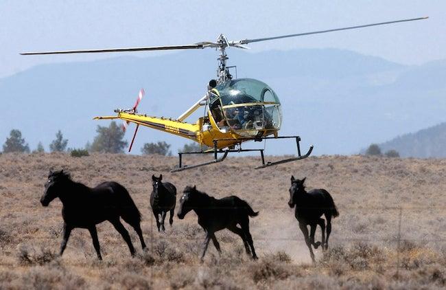 Range War Brewing Between Ranchers and Wild Mustangs