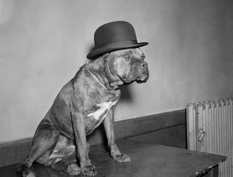 Even In The 1900s, Humans Were Obsessed With Photos Of Dogs In Clothes
