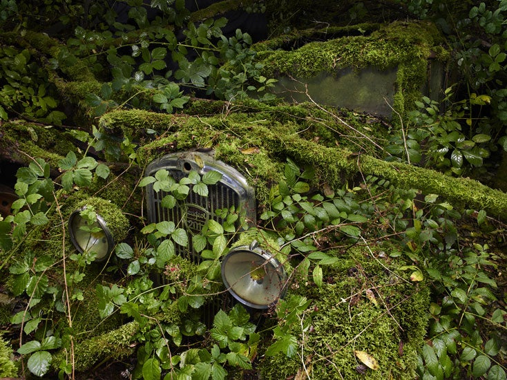 Photos of the abandoned antique cars nature has reclaimed