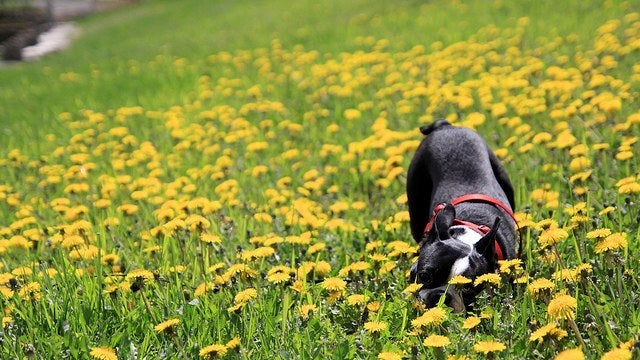 Enjoy Some May Flowers in This Week's Open Thread