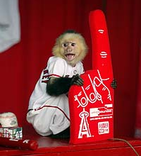 'Rally Monkey' Creator Destitute, Selling World Series Ring