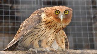 Good Evening, Night Owls
