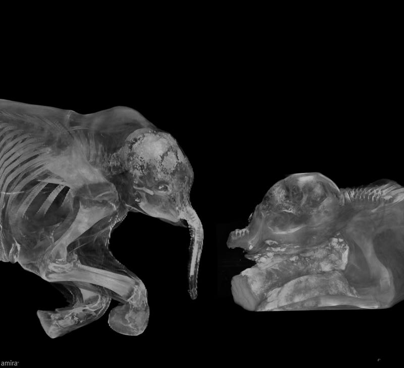 First Detailed Look Inside the Childhood of a Lost Species