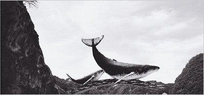 'Times' Mag: Whale Pornographers