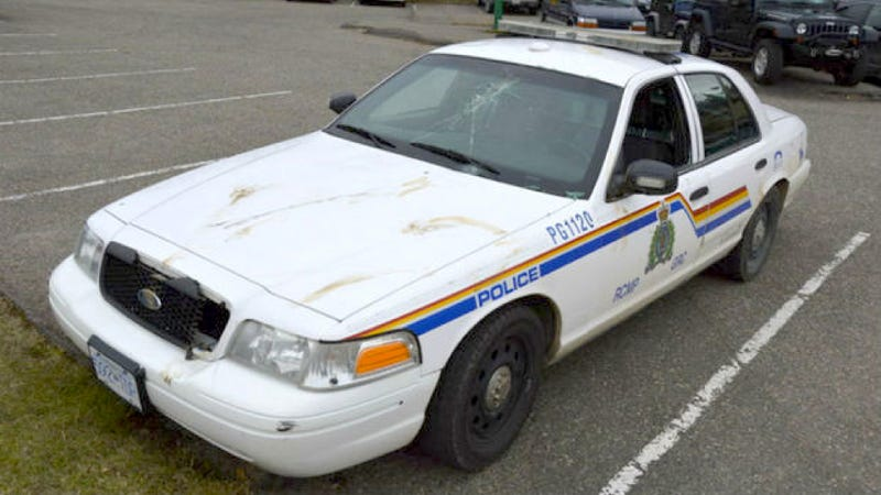 This Is What Happens When A Moose Attacks A Police Car