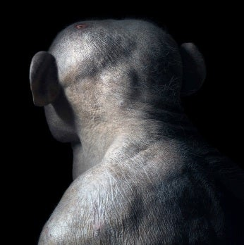 These Portraits Will Change The Way You See Animals