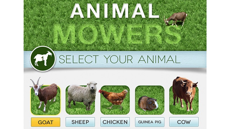 Find Out How Many Goats (or Guinea Pigs) It Would Take to Mow Your Lawn