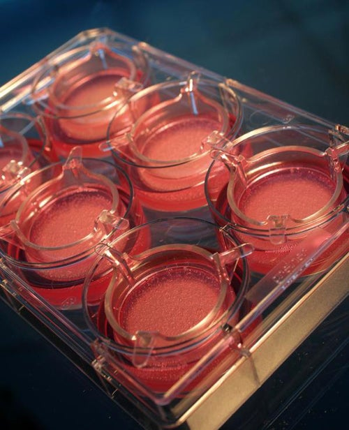 One Unit of Lab-Grown Human Skin Now Costs 34 Euros