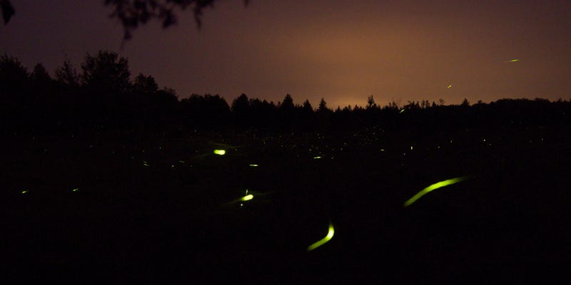 Shooting Challenge: Fireflies