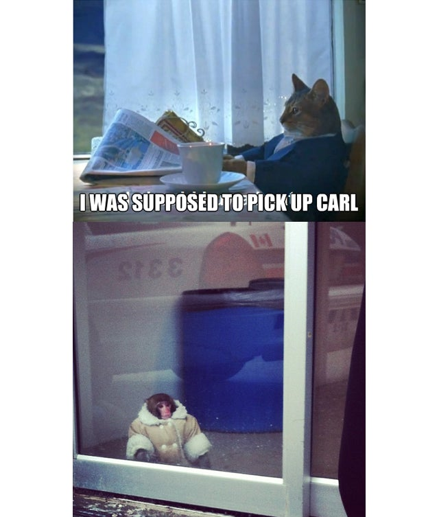 The Best of Ikea Monkey, the Meme