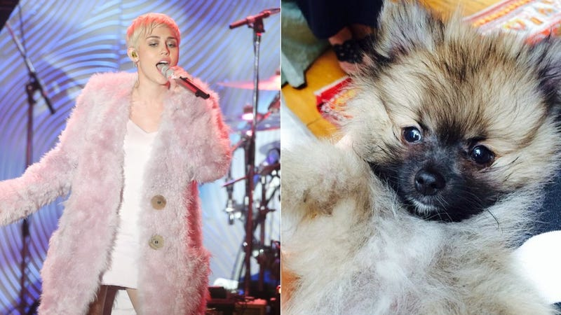 Miley Cyrus' Mom Bought Her A New Dog Already