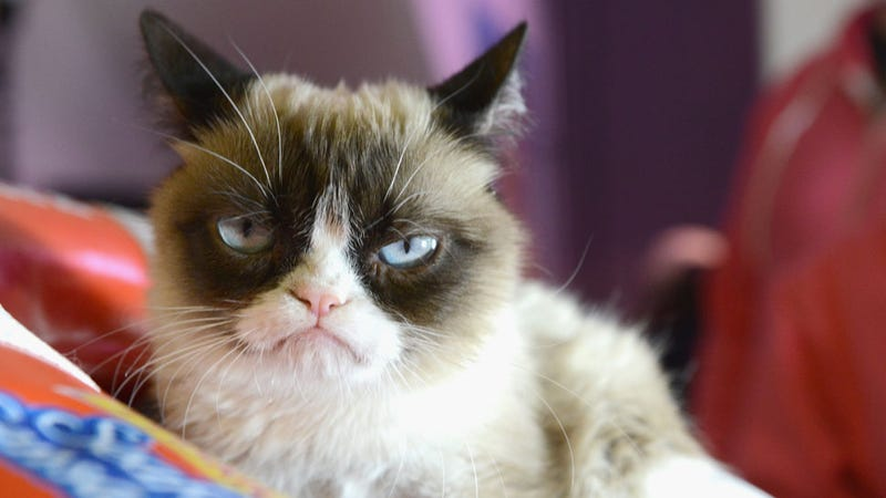 Meet the Man Who Made Grumpy Cat a Millionaire