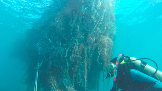 Divers Remove 57 Tons Of Junk From Hawaii's Northwestern Islands