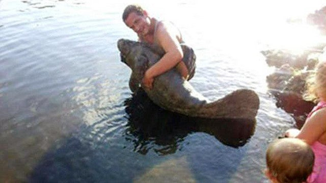 Man harasses a baby manatee, puts pics on Facebook, gets arrested