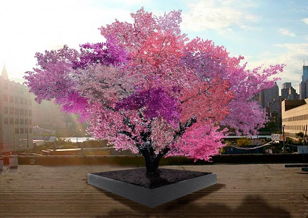 This Tree Is Growing 40 Different Kinds Of Fruit At Once