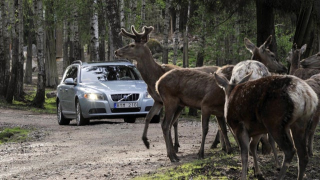 Volvo Avoids The Moose, Reviewers Avoid The Malibu Eco, And The Rise Of Kyushu Man
