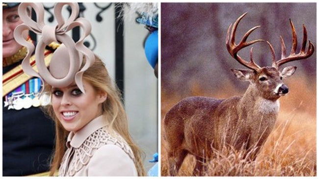 Princess Beatrice's Royal Wedding Hat: Birth of a Meme