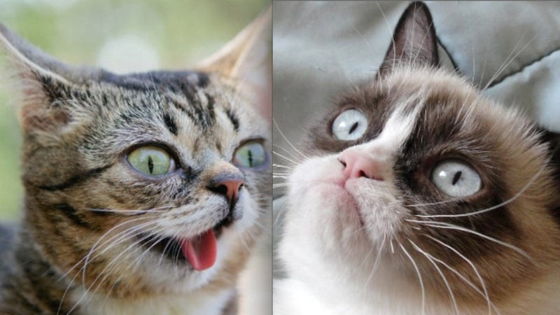 NOO: TIME's Grumpy Cat Photo Shoot Copycatted Bullett's Lil Bub Photo Shoot