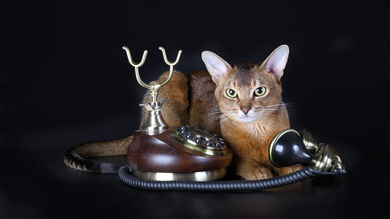 Hey, Ladies — Cat Calls are Flattering! Deal With It