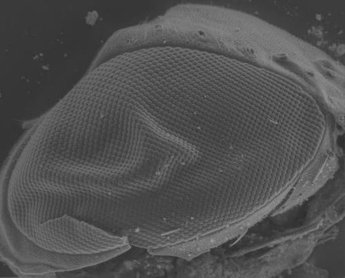 Fly eyes will power the next generation of solar cells