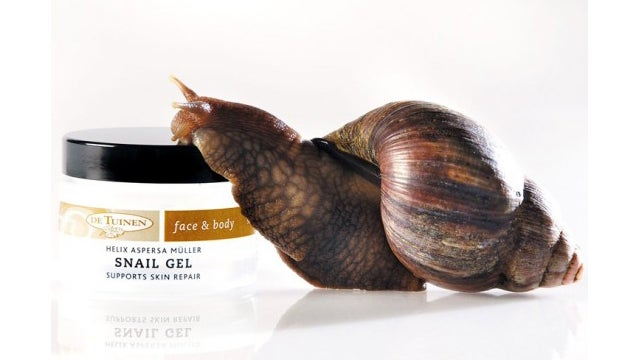 Feeling Old? Let a Snail Crawl On Your Skin