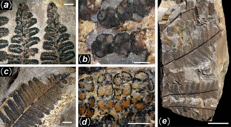 First Photos of China's 298-Million-Year-Old Buried Forest