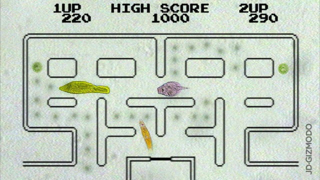 Scientists Create Real-Life Pac-Man Using Microorganisms