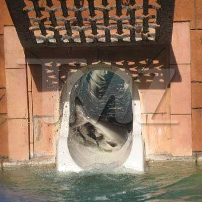 Rebel Shark That Plays By His Own Rules Jumps Onto Waterslide, Lives Fast, Dies Young