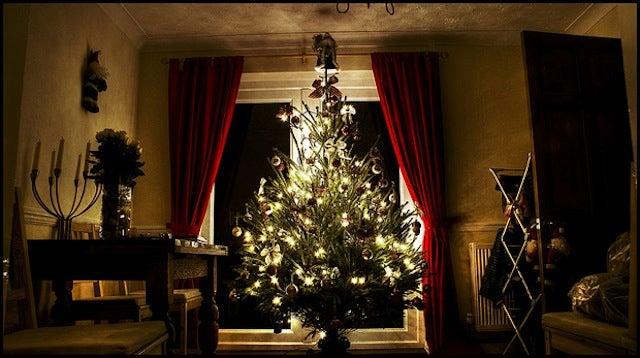 "Banana Hormones: The Secret to Engineering ""Smart"" Christmas Trees"