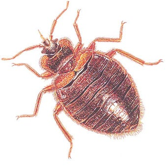 Let's Be More Copacetic About Bedbugs
