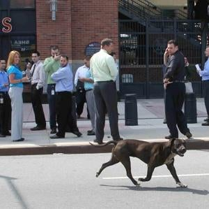Mets Fans Now Being Hunted Down Like Dogs, By Dogs