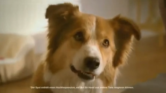 This Dog Food Commercial Has Sounds Only a Dog Can Hear