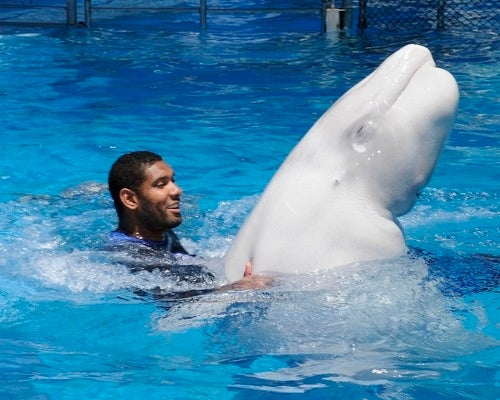 What In God's Name Is Tim Duncan Doing To That Whale?