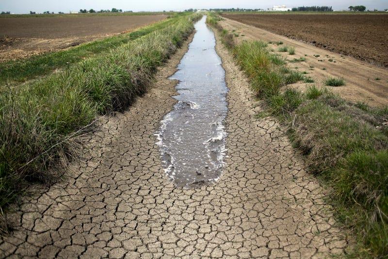 It's Farmers vs. Fish In the California Water Wars