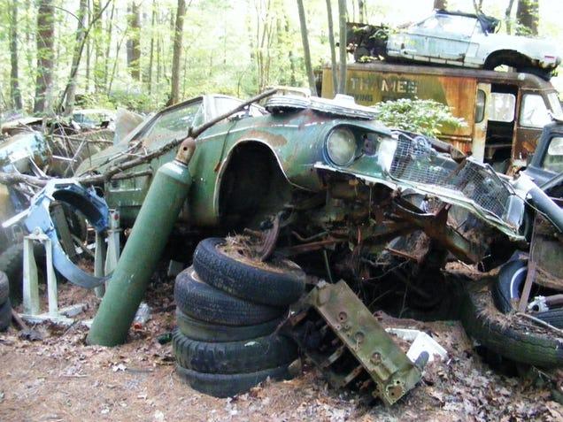 Massive Secret Mustang Junkyard Found In Rhode Island Forest