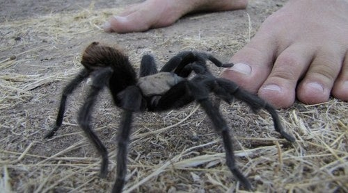 Scientific proof that the scariest thing imaginable is a tarantula