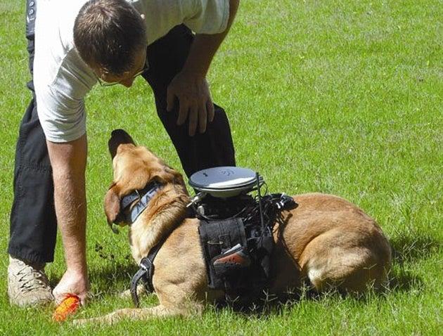 Presenting the Remote Controlled Super Doggie